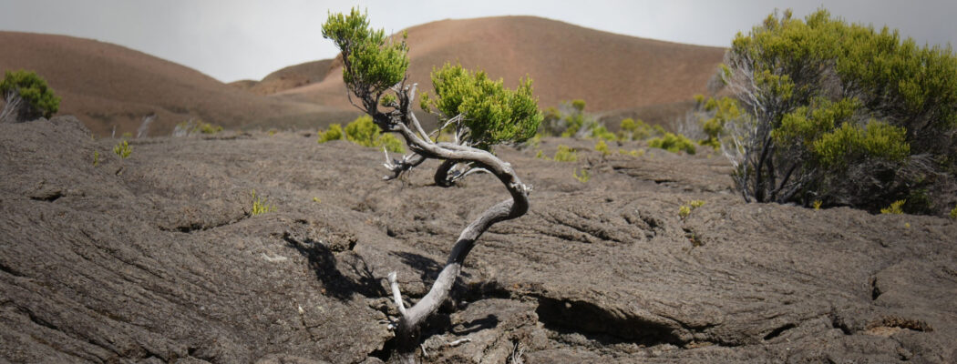 Resilience: Are you ready for new challenges?